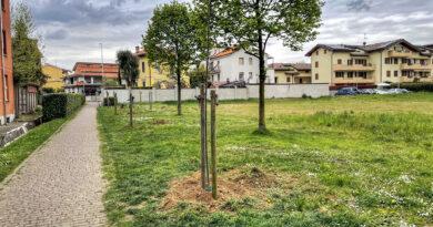 Via Falcone e Borsellino: Ripristinati i filari di Tigli